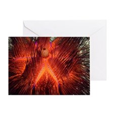 False fire urchin Greeting Card