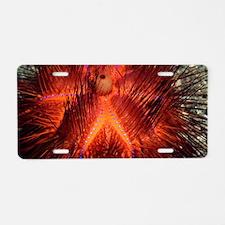 False fire urchin Aluminum License Plate