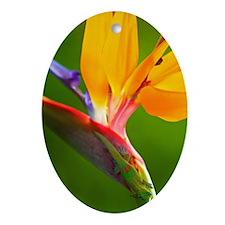 Bird of Paradise Flower #1 Oval Ornament