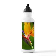 Bird of Paradise Flowe Water Bottle