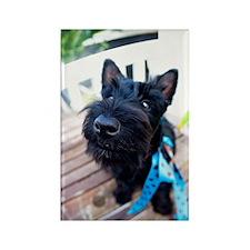 Scottie Dog Puppy Rectangle Magnet