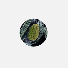 Encarsia wasp head, SEM Mini Button
