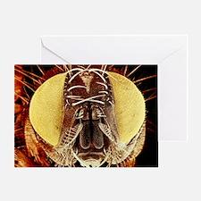 False-colour SEM of the head of a ho Greeting Card