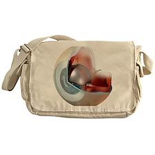 Eye anatomy, artwork Messenger Bag
