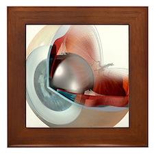 Eye anatomy, artwork Framed Tile