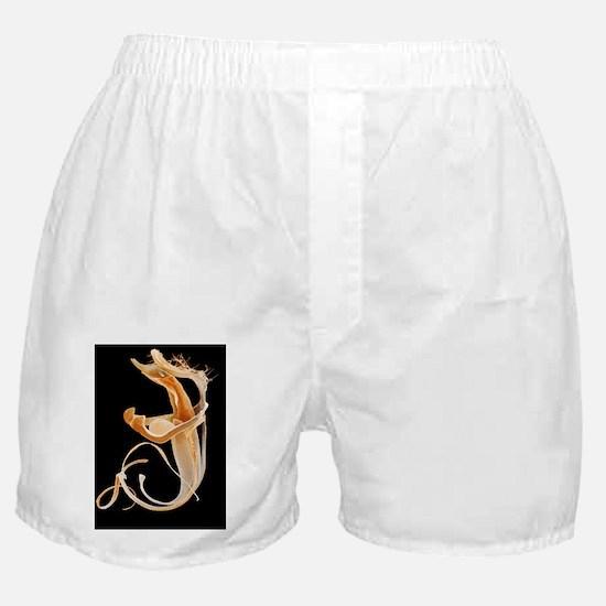 Flea penis, coloured SEM Boxer Shorts