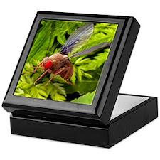 Fruit fly, SEM Keepsake Box