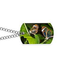 Glasswing butterflies Dog Tags