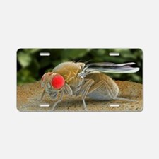 Fruit fly, SEM Aluminum License Plate