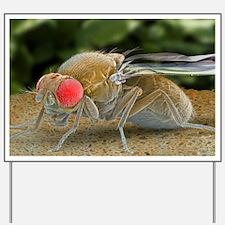 Fruit fly, SEM Yard Sign