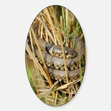 Grass snake Decal