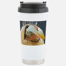 Head louse penis, colou Stainless Steel Travel Mug