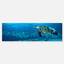 Hawksbill turtle Sticker (Bumper)