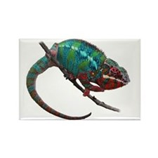 red and blue panther chameleon Rectangle Magnet