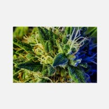 glistening trichomes Rectangle Magnet