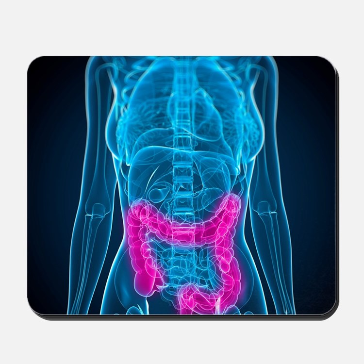 Healthy large intestines, artwork Mousepad