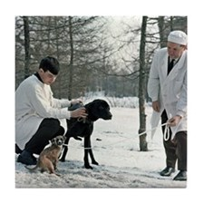 Demikhov's laboratory dogs, 1967 Tile Coaster