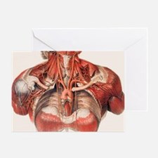 Blood vessels of chest and neck Greeting Card