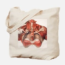 Blood vessels of chest and neck Tote Bag
