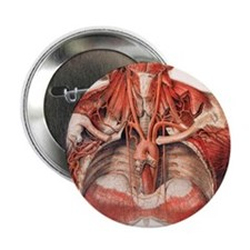 """Blood vessels of chest and neck 2.25"""" Button"""