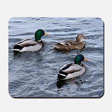 Three Ducks on the Lake Mousepad