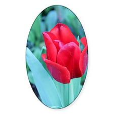 Red_Tulip_II Decal