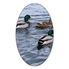 Three Ducks on the Lake Decal