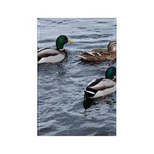 Three Ducks on the Lake Rectangle Magnet