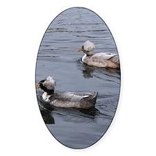Ducks on the Lake Decal