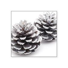 """silver pine cones Square Sticker 3"""" x 3"""""""