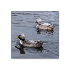 "Ducks on the Lake Square Sticker 3"" x 3"""