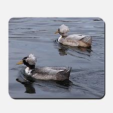 Ducks on the Lake Mousepad
