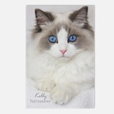 Ragdoll Kitten Postcards (Package of 8)