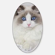 Ragdoll Kitten Sticker (Oval)
