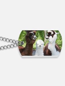 Three different alpacas Dog Tags
