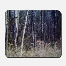 PICT0050 birch grove in forest Mousepad