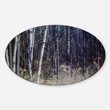 PICT0050 birch grove in forest Sticker (Oval)