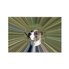 STAFFIE STELLA 2 - TUNNEL Rectangle Magnet