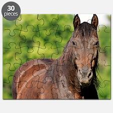 Calvin Puzzle