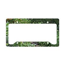 Panama Landscape License Plate Holder