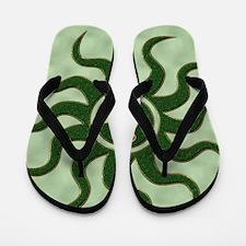 sun green gm Flip Flops