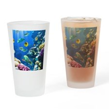 Ocean Life Drinking Glass