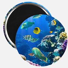 Ocean Life Magnet
