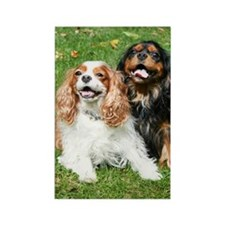 Happy Cavalier King Charles Spani Rectangle Magnet