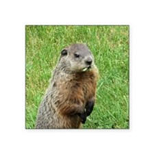 """Woodchuck Eating Square Sticker 3"""" x 3"""""""