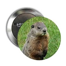 "Woodchuck Eating 2.25"" Button"