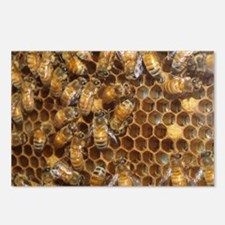 Honey Bees Postcards (Package of 8)