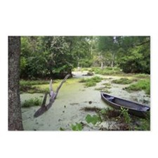 Swampwalk Medium Postcards (Package of 8)