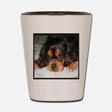 Puppy King Charles Spaniels Pillow Shot Glass