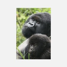 Mountain Gorilla Father  Son Rectangle Magnet